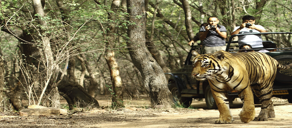 Ranthambore-Tour-Package